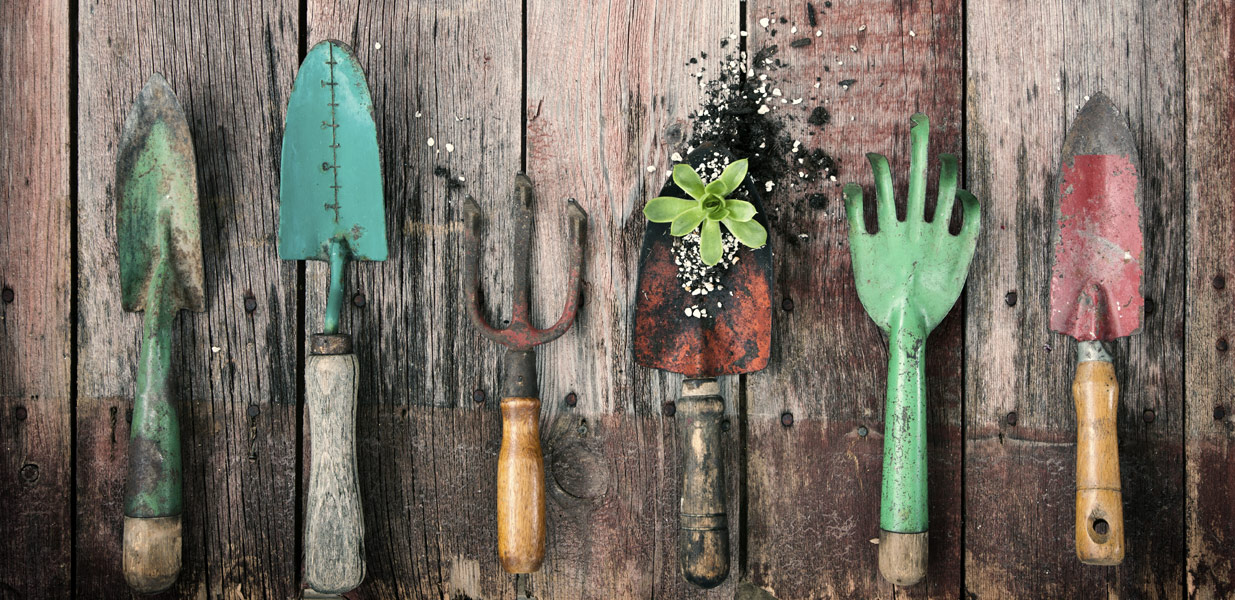 Quality Gardening Maintenance Services in Tunbridge Wells
